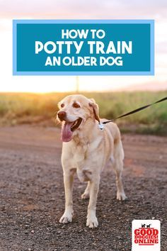 How To Potty Train A How To Potty Train An Older Dog If Your Dog