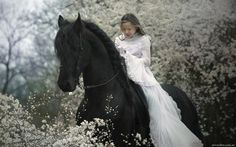 horses and girl