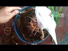 Handmade Crafts, Make It Yourself, Bonsai, Garden, Bonsai Trees, Garten, Bonsai Plants, Home Crafts, Crafts