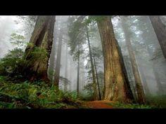 Calentamiento global verdad o mentira | El blog de la Tierra -- Consejos para ayudar a la Tierra