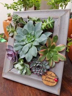 55 creative DIY succulents ideas for you - Page 53 of 55 Succulents, plants, DIY, potted plants, suc Succulent Frame, Succulent Wall Art, Succulent Pots, Planting Succulents, Planting Flowers, Succulent Ideas, Succulent Gardening, Container Gardening, Garden Plants