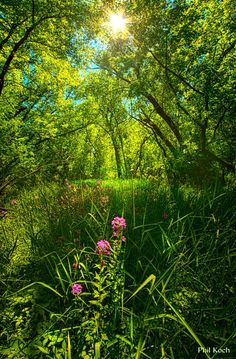 """""""In The Woods"""" Wisconsin Horizons By Phil Koch. Beautiful World, Beautiful Places, Beautiful Pictures, Landscape Photography, Nature Photography, Jolie Photo, Belleza Natural, Nature Scenes, Science And Nature"""