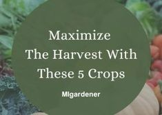 MIgardener shares tips on maximizing the harvest. These crops will produce double, or even triple than you'd expect if you harvest them early.