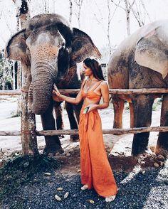 #girl #tmblr #elephant #goal #instapic #cute #wattpad #wpad Elephant, Elephants
