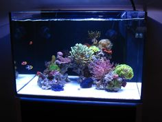 Reef Central is dedicated to the marine reef aquarium hobby. Learn about reef aquarium setup and maintenance, and view coral and marine fish photos. Visit our online community and discuss and chat with hobbyists of all levels from beginner to advanced. Coral Aquarium, Aquarium Setup, Live Aquarium, Nano Aquarium, Marine Aquarium, Aquarium Fish, Saltwater Fish Tanks, Saltwater Aquarium, Freshwater Aquarium