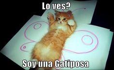 Lolcat en español: Lo ves? Soy una gatiposa
