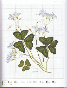 Gallery.ru / Фото #60 - Herbier - Mosca