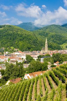 Alsace-Lorraine, France.  Known for Riesling wines, fois gras, quiche, and choucroute garnie!