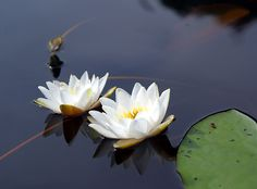 Water Flowers, Water Lilies, Garden Park, France Travel, Pretty Flowers, Lovers Art, Finland, Natural Beauty, Scenery