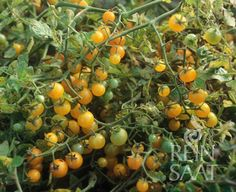 Planters, Home And Garden, Pumpkin, Fruit, Outdoor, Outdoors, Pumpkins, Plant, Outdoor Games