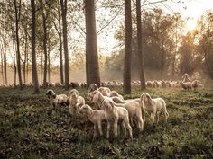 Stand out from the flock, be a leader with the OM-D pro-style performance. Captured by Massimo Gelosini with an OM-D and the M. What A Wonderful World, Flocking, Wonders Of The World, Om, Lens, Creatures, Nature, Animals, Style