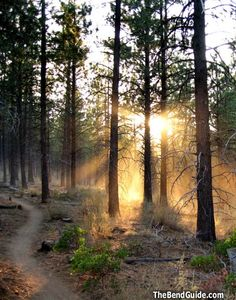 Endless of miles of sweet single track on Phil's Trail in the Deschutes National Forest.