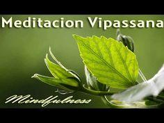 Mi experiencia: Meditación Vipassana 1/2 - Daniela Ayon - YouTube