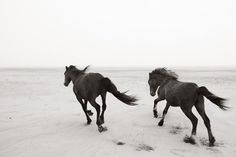 DREW DOGGETT Photography | The Horses of Sable Island.