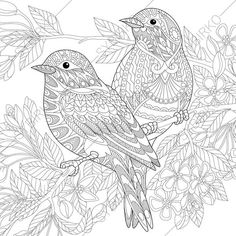 Sparrow Birds Adult Coloring Book Page. Zentangle Doodle