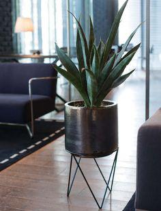 おしゃれな鉢の専門店。鉢マニアの店長が厳選した鉢のみをご紹介。観葉植物やベランダガーデンをおしゃれに演出します。