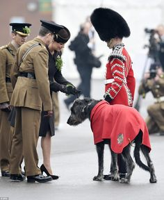 Take one: The Duchess of Cambridge attempts to pin a sprig of shamrock onto the collar of Irish wolfhound Domhnall