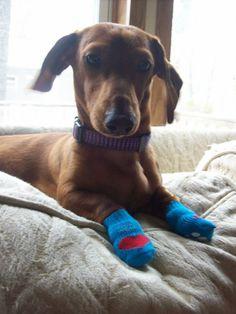 Mayzie needs doggie mittens!