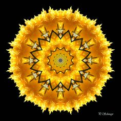 Mandala ''Blüte gelb'' von KreativesbyPetra    Mandala auf Leinwand gespannt 20cm x 20cm, mit schwarzen Seitenrand 2cm breit    #kreativesbypetra #Mandala #mandalaart #Natur #nature #fotografie #photography #naturfotografie #naturephotography #makro #macro #makrofotografie #macrophotography #Spiegelung #Spiegelungen #abstrakt #Abstract #Reflexion #adobephotoshop #photoshop #canon #farben #colours #Leinwand #blüte #blossom #gelb #yellow Mandala Art, Adobe Photoshop, Petra, Psychedelic, Halloween, Canon, Home Decor, Mandalas, Macros