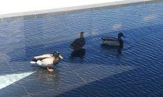 les nouveaux baigneurs de l'Archipel la Cité de l'eau :)