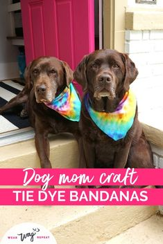 Do you love colorful accessories for your dog? This is a simple summer craft for you! Tie dye is one of the hottest trends to experiment with this year. To get the rainbow swirl effect for my dog's bandanas I used all the colors of the rainbow. The best part about this craft is that it's eco friendly! I used an old t-shirt to make no sew bandanas. The t-shirt works great with tie dye. Get the full DIY Rainbow Tie Dye Dog Bandana tutorial on my blog Wear Wag Repeat. Dog Bandana, Tie Dye Bandana, Dog Washing Station, Tie Dye Kit, Diy Dog Bed, Dog Birthday, Summer Crafts, Dog Accessories, Dog Friends