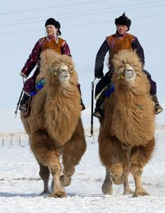 Camels riders in the Gobi desert  #travel