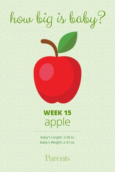 Your baby is now the size of an apple. His brain now controls all the muscles in her body; he is able to move. Yes, he'll even do somersaults! But if this is your first baby, you probably won't feel him moving for several more weeks. 2 Weeks Pregnant, Prenatal Development, Baby Weeks, Boy Post, Nursing Mother, Blood Test, How Big Is Baby, He Is Able, Pregnancy