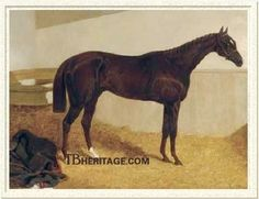 The Baron, this dark liver chestnut is Tapit's seventeenth generation sire. He was by Birdcatcher out of the Economist mare Echidna.
