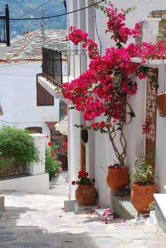 Pequeno terraço na ilha de Skopelos no Mar Egeu. Arquipélago das Espórades, Grécia. Primaveras dão colorido à paisagem.