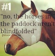 "Lol dad always asks ""why do the horses have blindfolds on?!"""
