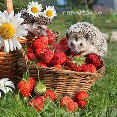 strawberry by Elena Eremina on 500px