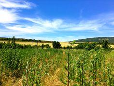 ¿Que tal va la semana calurosa? Nosotros con estas vistas y una rica infusión, de maravilla☺️ Os preguntaréis, una infusión con este calor? Sii, con un par de hielos están buenísimas, os lo recomendamos😋  #Josenea #DelCampoALaTaza #Finde #Weekend #Caluroso #Calor  #Hot #OlaDeCalor #HeatWave #Vistas #Views #Infusion #Ecológica #Organic #Tea #Té #Hielo #Ice