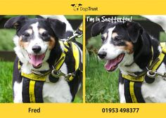 Fred is a sweet boy at Dogs Trust Snetterton who is finding kennel life a little overwhelming. He enjoys being with people and loves to curl up in a cosy bed. He enjoys his food, a little too much actually, so his carers at Dogs Trust have put him on a diet!