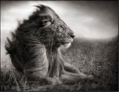 The most amazing animal shots via blissfulb blog ( lovely Traci :)