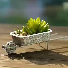 Two awesome DIY Succulent Gifts! - Succulent City Two awesome DIY Succulent Gifts! Succulent Gifts, Succulent Gardening, Succulent Terrarium, Planting Succulents, Succulent Ideas, Succulent Care, Succulent Plants, Succulent Containers Ideas, Propogate Succulents