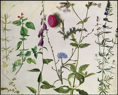 Albrecht Durer 'Eight Studies of Wild Flowers' watercolor, 16th century by Plum leaves, via Flickr