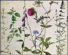 Albrecht Durer 'Eight Studies of Wild Flowers' watercolor, 16th century by Plum leaves, via Flickr