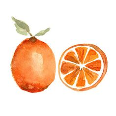 Orange study no 2, botanical art Print of original still life watercolor painting, minimalist, tangerine tango ,kitchen art