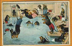 P.O. Engelhard- Dachshunds in Swimming Pool