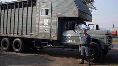 """Cavalaria """"Big"""" Polícia Militar São Paulo"""
