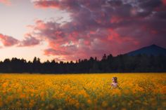 """Field of Dreams - ***Summer Photoshop Secrets Flash Sale - Only $59 for my 4+ hour July Photoshop secrets video tutorials - regularly $399***  Purchase Here---> <a href=""""http://www.ljhollowayphotography.com/shop/july-2014-live-webinar-recording/"""">SHOP</a>  Sale ends Monday, August 15th at midnight!"""