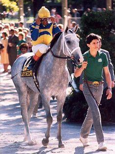Secretariat's little girl: Lady's Secret a beautiful daughter of Secretariat. Horse of the Year & Champion Older Mare, 1986.: