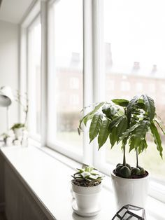 Lovely windowsill in a Scandinavian styled Gothenburg apartment.