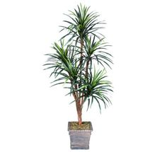 One 6 Yucca Artificial Trees with 5 Heads with No Pot *** Check out the image by visiting the link.