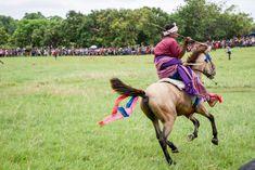 Le festival de la Pasola a lieu chaque année aux mois de février et mars, principalement dans les régions de l'Ouest de l'île de Sumba, d'où il est originaire. La date de ces rituels guerriers n'est connue que quelques semaines à l'avance, en fonction d'une étrange coordination. Mars, Camel, Animals, Warriors, Animales, March, Animaux, Camels, Animal