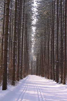 Items similar to Landscape tree photography print, tall trees art print, ski photography print, Hiawatha print on Etsy Tree Photography, Fine Art Photography, Beautiful Love, Beautiful Artwork, Travel English, Sell My Art, Prince Edward Island, Good Good Father, Tree Art