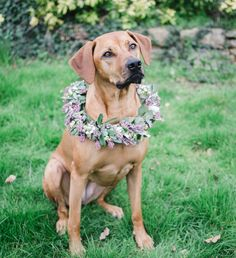 Natural Bouquet, Flower Crown, Labrador Retriever, Pitbulls, Dogs, Nature, Flowers, Animals, Crown Flower