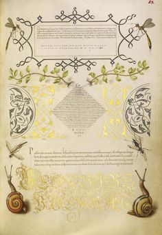 Joris Hoefnagel, illuminator [Flemish / Hungarian, 1542 - 1600] and Georg Bocskay, scribe [Hungarian, died 1575] ,Insects, Basil Thyme, and...