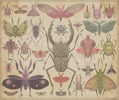 Entomologist's Wish by VLADIMIR... . . ., via Flickr