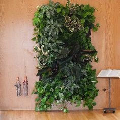 Wally One with Reservoir // Chocolate. Woolly Pocket Eco-Friendly Vertical Gardening.